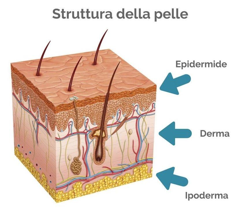 pelle struttura